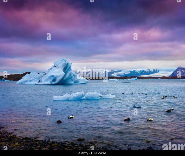 Arctic ducks between blue icebergs in Jokulsarlon glacial lagoon. Colorful sunset in Vatnajokull National Park, - Stock Image
