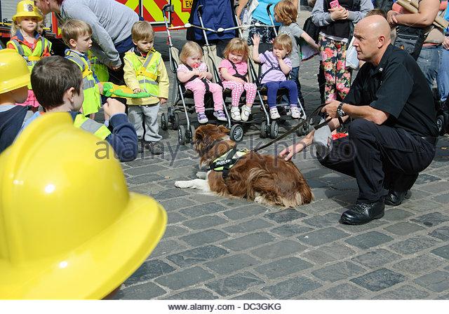 Rescue Dog Penrith