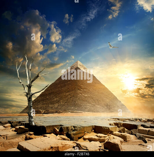 Big bird over pyramid and dry tree - Stock Image
