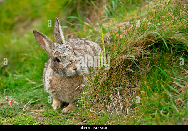 how to find a rabbit burrow