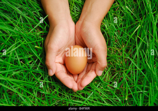 Eggs of a bird in hand with green grass background - Stock-Bilder