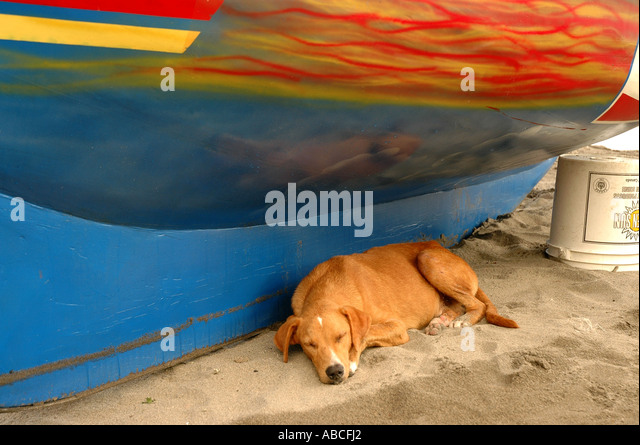Grenada caribbean dog asleep under boat on beach in shade, lazy relaxing animal - Stock Image