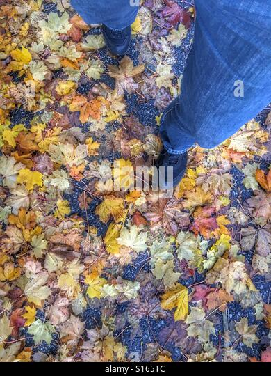 Walking on wet autumn leaves. - Stock Image