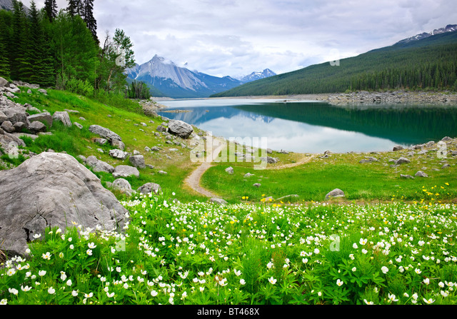 Wildflowers on the shore of Medicine Lake in Jasper National Park, Canada - Stock Image