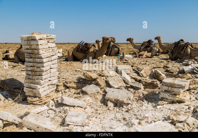 Evenly-cut salt slabs await loading onto camels in the Dallol, Ethiopia - Stock Image
