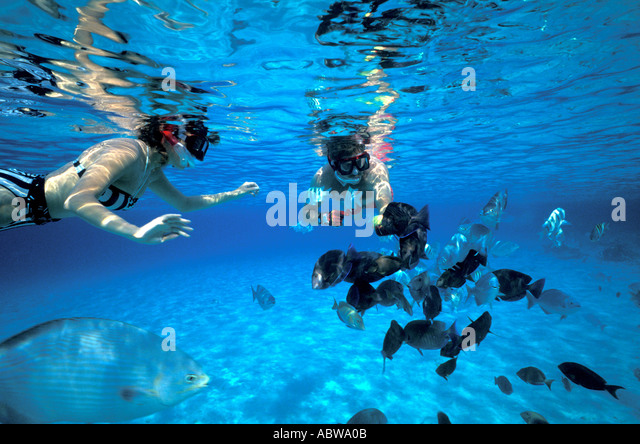 Couple snorkeling and feeding schoolingfish underwater cozumel mexico Caribbean mexican caribbean riviera maya clear - Stock Image