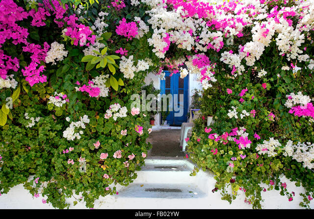 Blooming flowers in Kritinia village, Rhodes Island, Greek Dodecanese - Stock Image