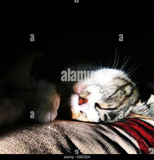 Adorable Sleeping Kitty Cat. - Stock Image