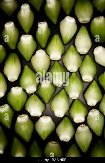 Artichoke Leaves in Pattern - Stock Image