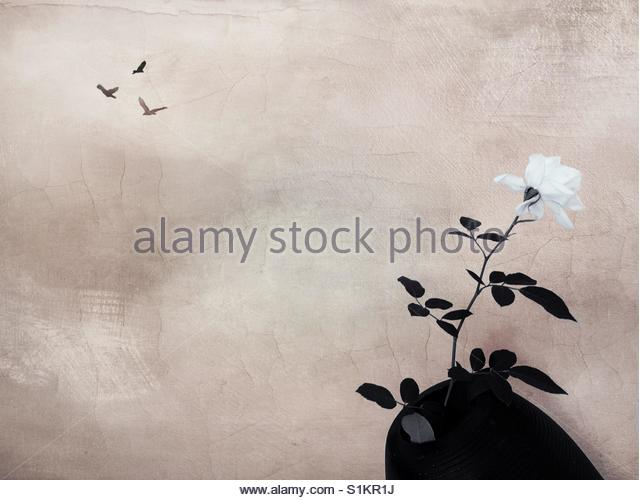 a white rose in a vase' - Stock Image
