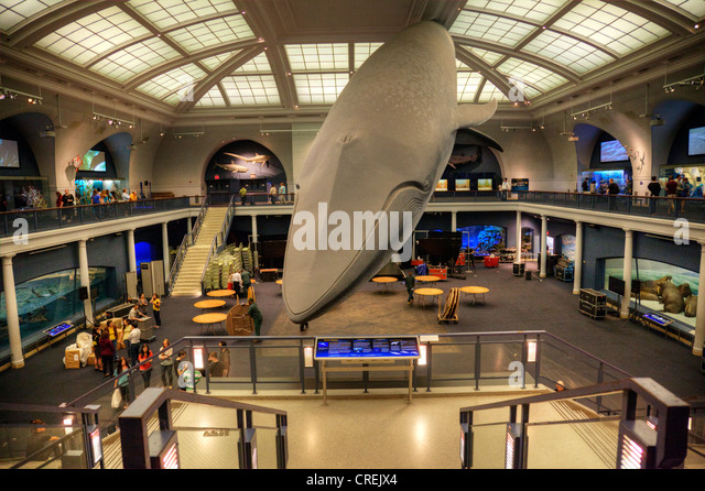 Stuffed Whale At Metropolitan Museum Of Natural History
