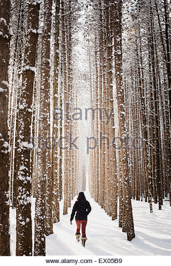 Woman walking through snow covered forest, Omemee Ontario Canada - Stock Image