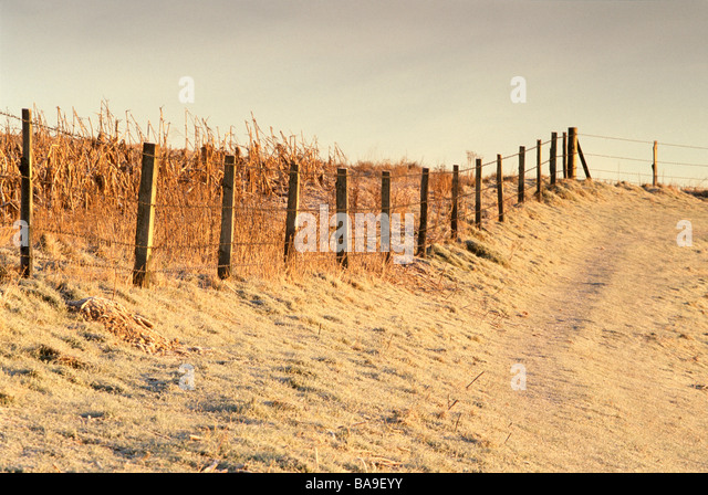 Fence in frost - Stock Image