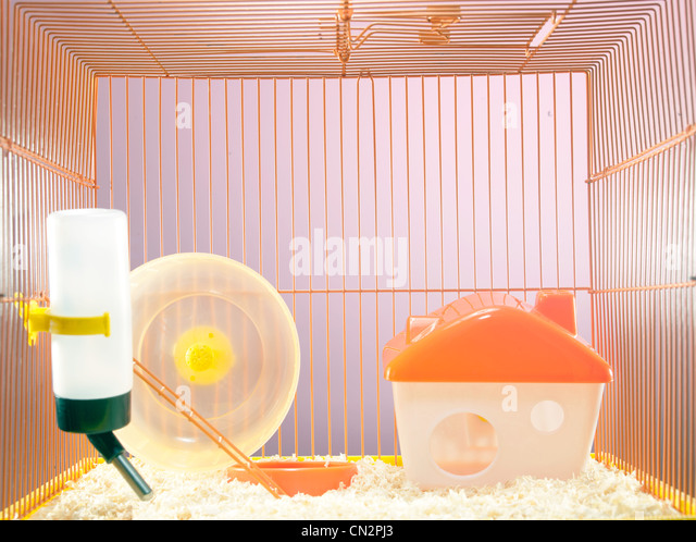 Empty hamster cage - Stock Image