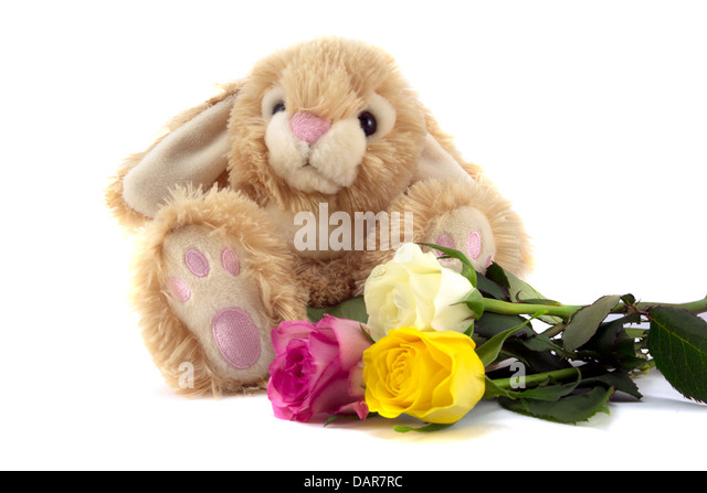 Cute fluffy bunny with rose bouquet - Stock Image