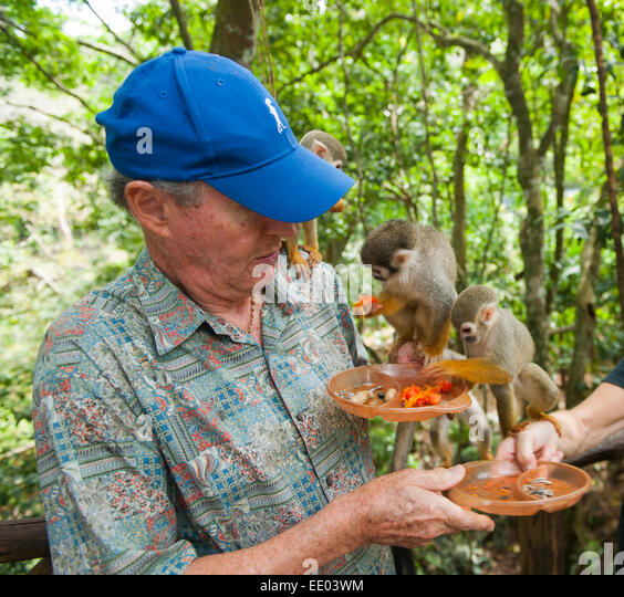 Dominikanische Republik, Nordküste, Sosua, Monkey Jungle - Stock Image