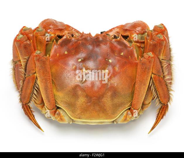 Chinese Mitten Crab Shanghai Hairy Stock Photos & Chinese ...
