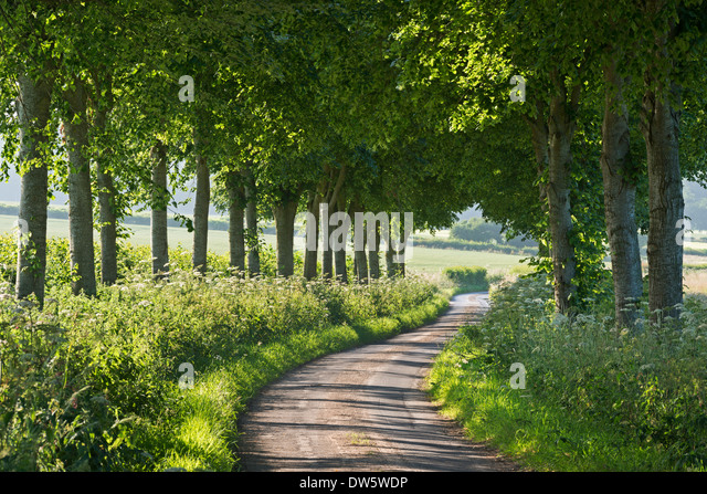 Winding tree lined country lane, Dorset, England. Summer (July) 2013. - Stock Image