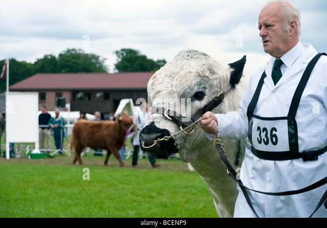 The last Royal Agricultural Society of England Show at Stoneleigh, Warwickshire, UK. Royal Show livestock class. - Stock Image