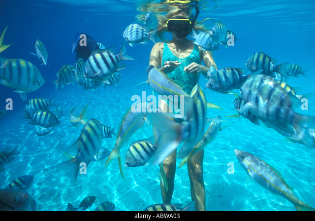 Woman snorkeler feeding fish green bathing suit sargeant major fish - Stock Image