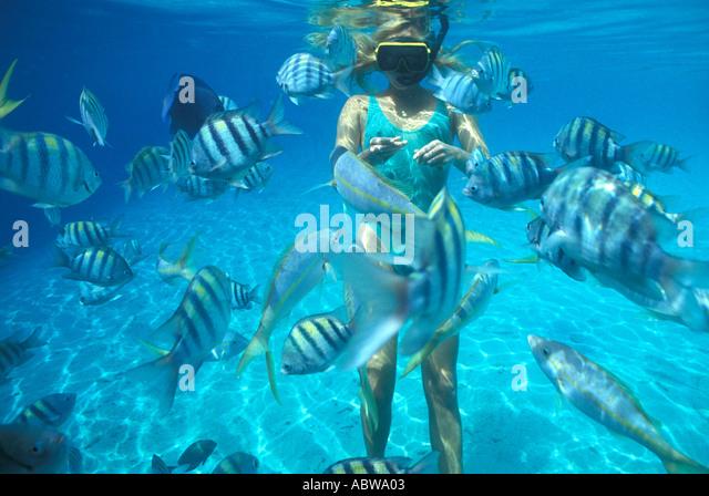Woman snorkeler feeding fish green bathing suit sargeant major fish - Stock Image
