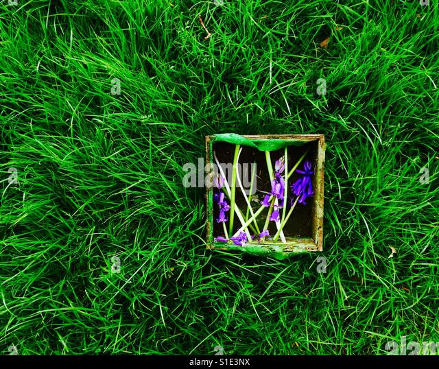 A box with bluebells in the green grass - Stock-Bilder