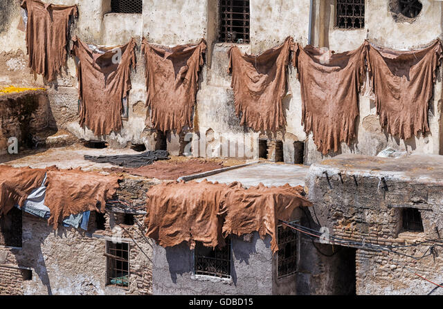 Tanned animal skill hanging on wall to dry. Tannery of Fès, Morocco. - Stock Image
