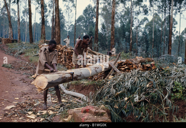 RWANDA Central East Africa Environment Deforestation Tree Felling Men cutting down trees - Stock Image