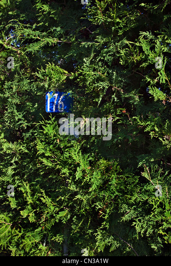House number in a hedge - Stock Image