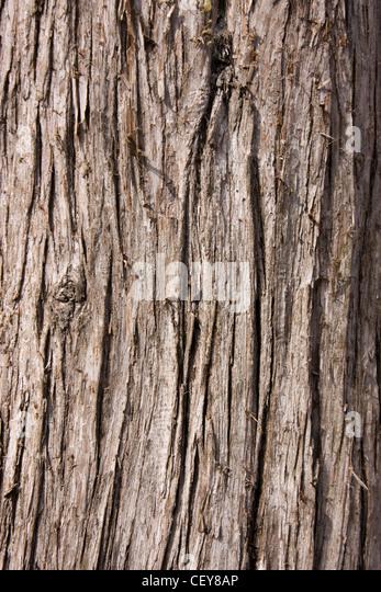 Bark of a tree - Stock-Bilder