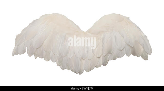 Fanned Out Bird Wings Isolated on White Background. - Stock Image