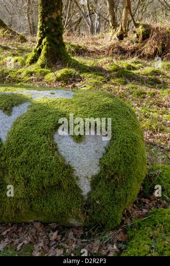 Love Heart shape in moss on granite bolder, United Kingdom, Europe - Stock Image
