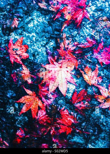 Red leaves on blue abstract background - Stock Image