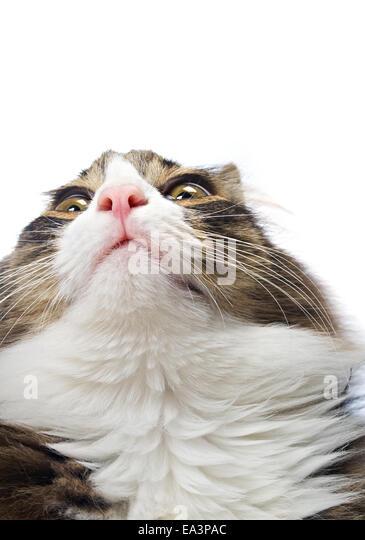 Emotional portrait - Stock Image