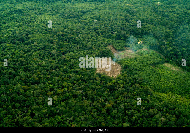 Rainforest clearance for agriculture small scale deforestation slash and burn Amazon Peru - Stock Image