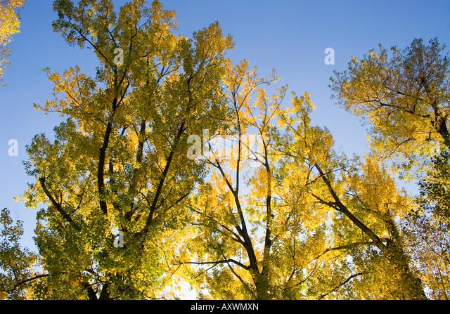 Switzerland Zuerich Zurich lake promenade in autumn trees - Stock Image