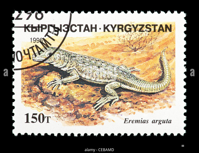 Postage stamp from Kazakhstan depicting a small lizard (Eremias arguta) - Stock Image