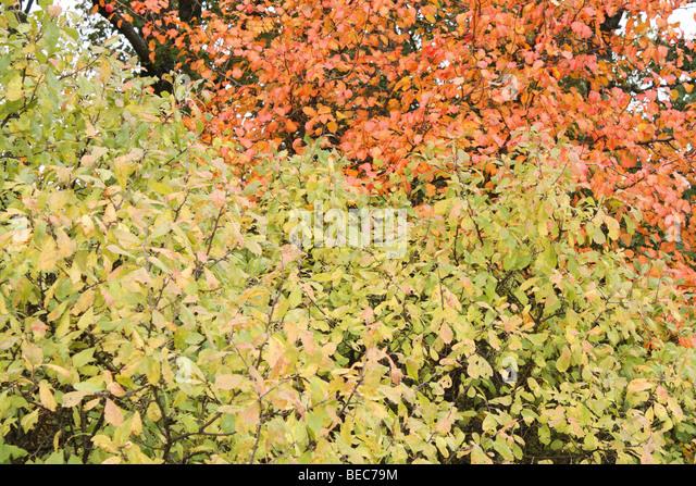 Leaves - Stock-Bilder