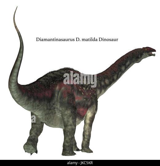Diamantinasaurus was a herbivorous sauropod dinosaur that lived in Australia during the Cretaceous Period. - Stock Image
