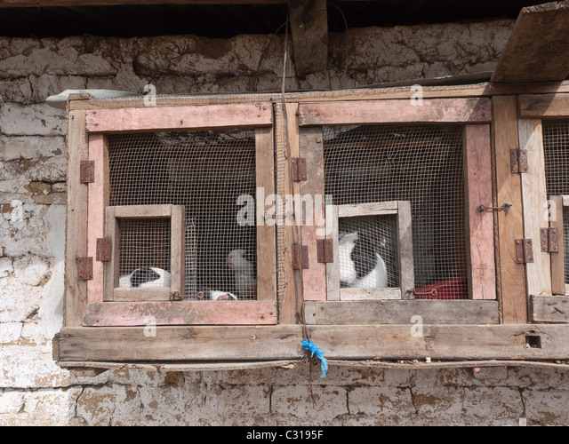 Rabbits and guinea pigs are caged and kept outside a home in Totonicapan, Guatemala. - Stock Image