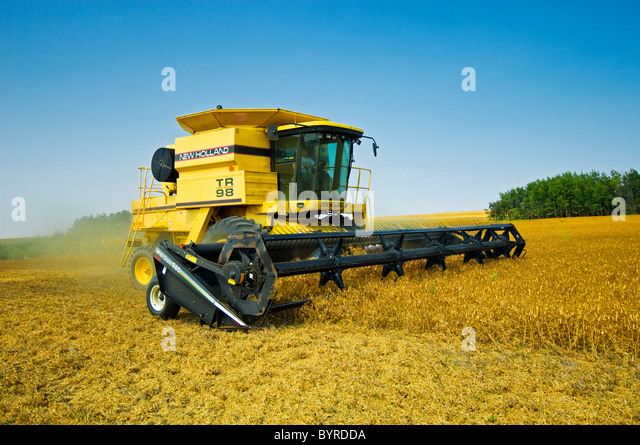 Agriculture - A New Holland combine harvesting mature dry peas / near Odessa, Saskatchewan, Canada. - Stock Image