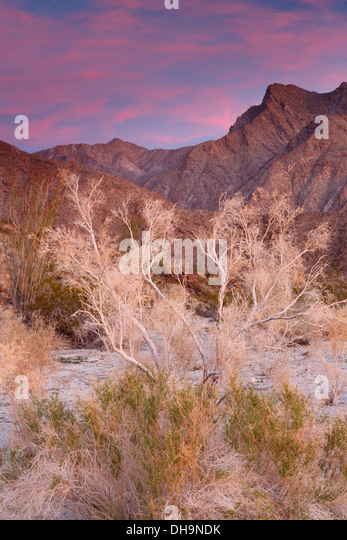 Anza-Borrego Desert State Park, California. - Stock-Bilder