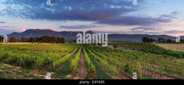 a vineyard nr Puyloubier with the Massif de la Ste Baume at dusk, Var, Provence, France - Stock Image