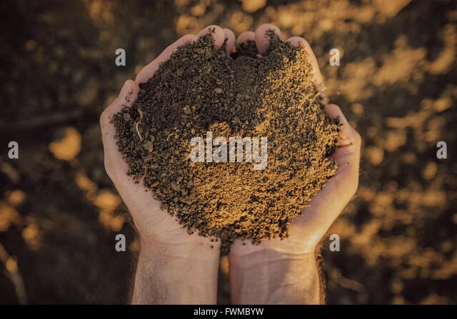 Male farmer holding pile of soil and examining its quality on fertile agricultural land, agronomist preparing land - Stock Image