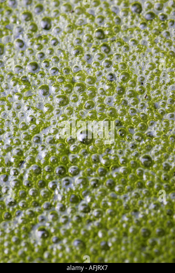 Stagnant stock photos stagnant stock images alamy for Green pond water