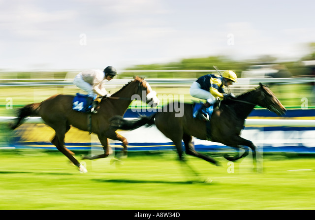 Horse Racing - in race to the finish line - Stock Image