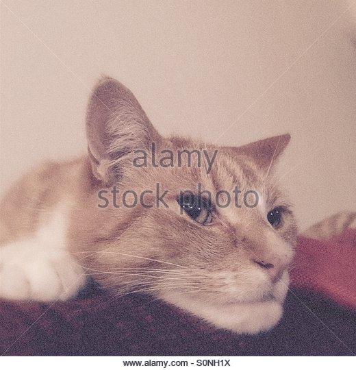 Cat Watch - Stock Image