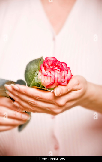 woman holding a pink rose in her hands - Stock-Bilder