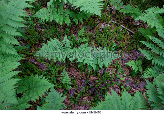 Ferns and mosses organized artistically in the forest. - Stock-Bilder