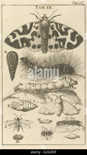 Print, print maker: Jan Luyken, Dating 1680 - Stock Image